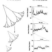Fractal-Wave Process
